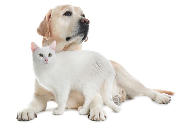 OHRA katten en hondenverzekering