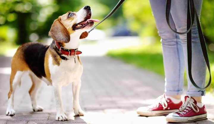 hond uitlaten tijdens corona