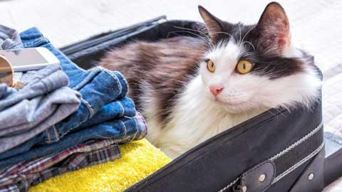 kat of hond mee op vakantie