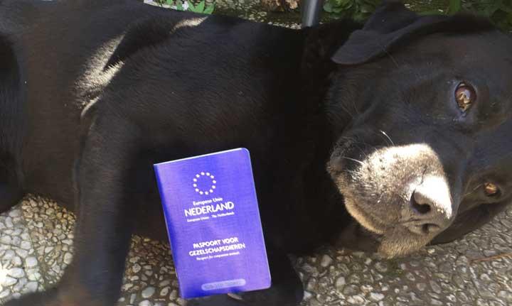 paspoort voor huisdieren