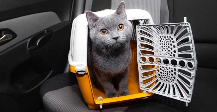 poes in kattenbench