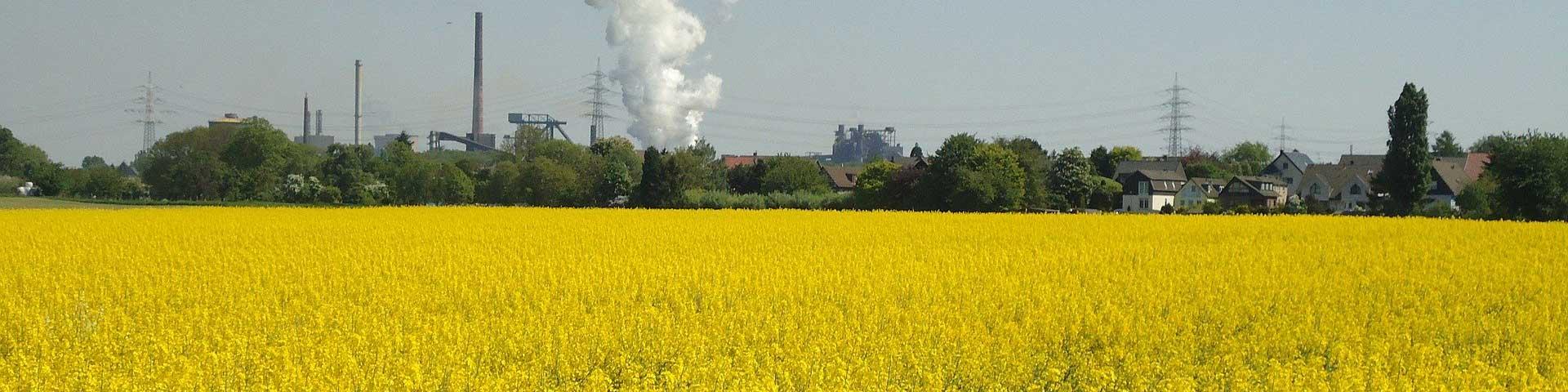 energie uit biomassa koolzaad